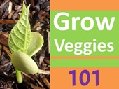 GrowVeggies101